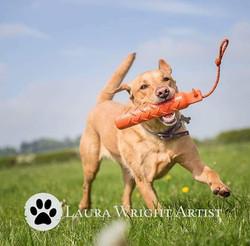 Be happy like a labrador! #labradorretri