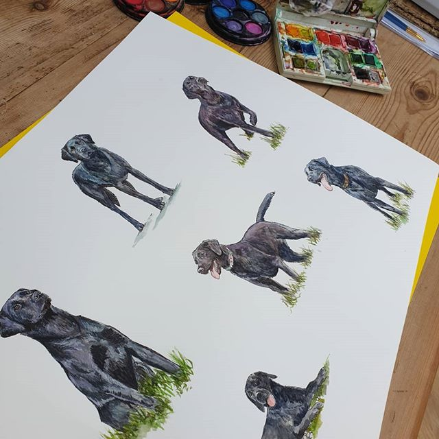 The black labradors join the party!