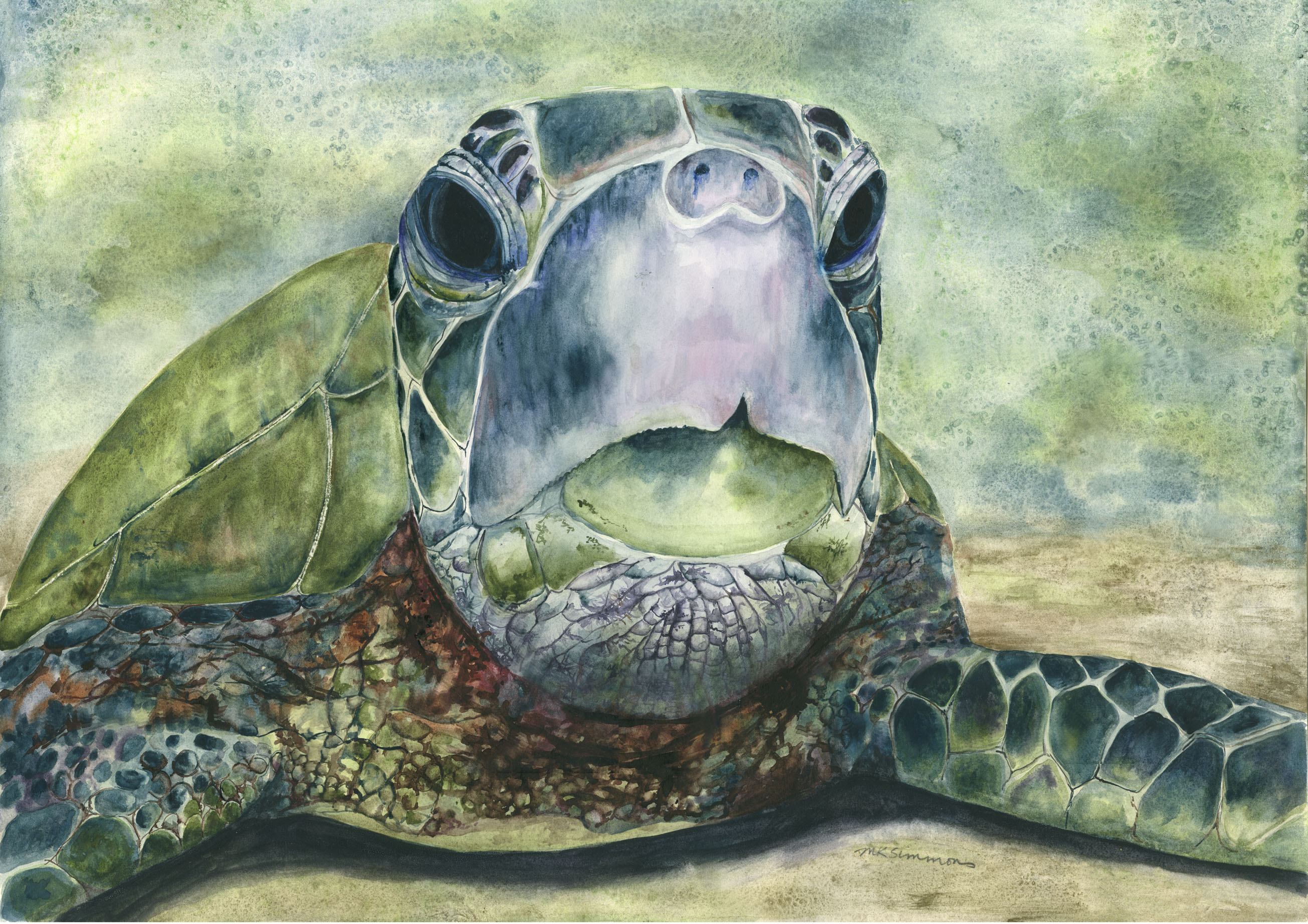 Kauila, Hawaiian Turtle Goddess