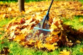 Raking fall leaves with rake.jpg