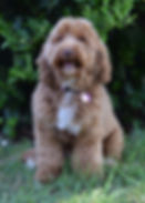 Rosie 7.17.2020 DSC_0036.jpg