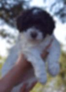 Lily 6 weeks cropDSC_0076.jpg