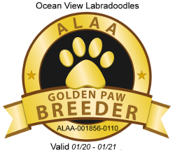 2020.2021 ALAA Gold Paw Logo 2020.png