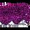 Thumbnail: Pochete Extravaganza - Roxa / Prata