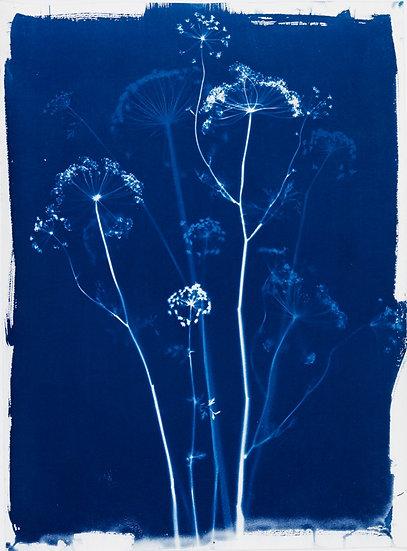 Fleurs des champs 2