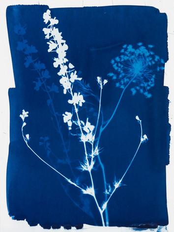 Bouquet de fleurs des champs 9.jpg