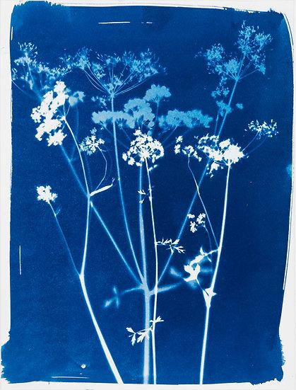 Bouquet de fleurs des champs 3