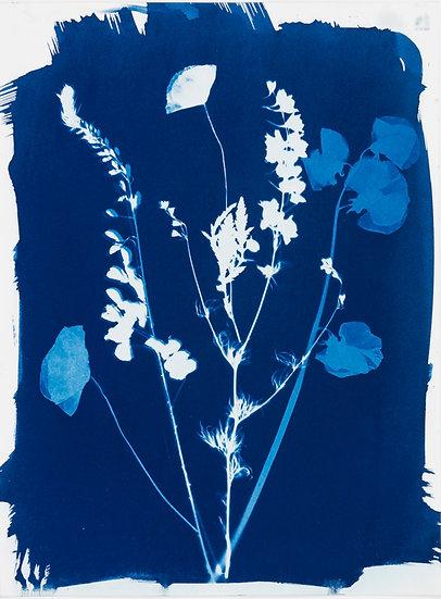 Bouquet de fleurs des champs 13