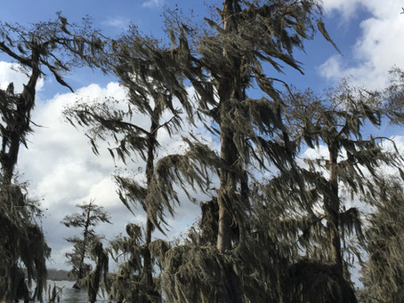 Swamp Tours - New Orleans Day Trip #3