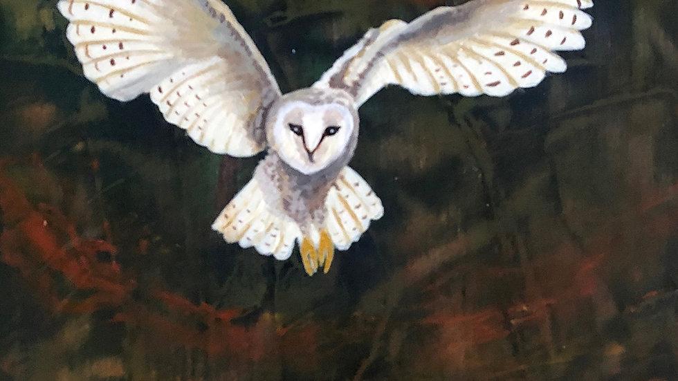 Sally Brophy, Autumn Barn Owl, 6x6