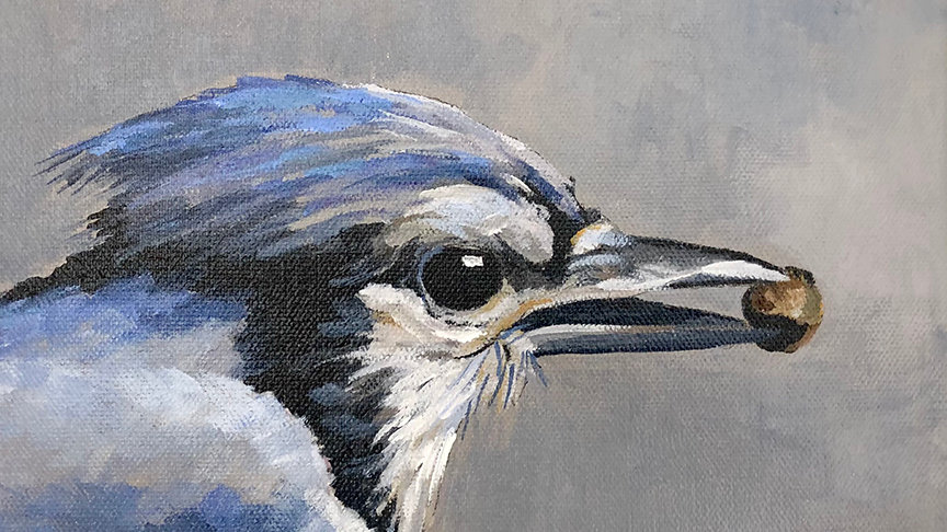Judy Graebert, Local Blue Jay, acrylic, 8x10