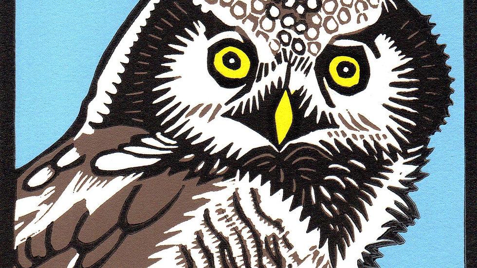 Leslie Moore, Northern Hawk Owl, linocut, 10x10 (frame size)