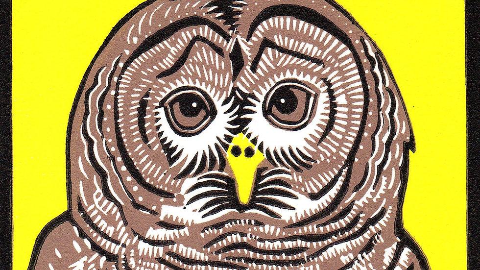 Leslie Moore, Barred Owl, linocut, 10x10 (frame size)