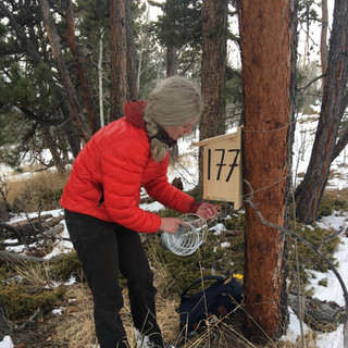 Mounting nest boxes at 8,000'