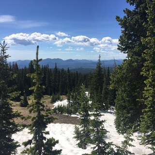 Our highest nestbox site at the Mountain Research Station; just over 11,000'
