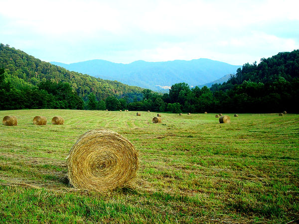 Hay Harvest at Compassionate Expressions