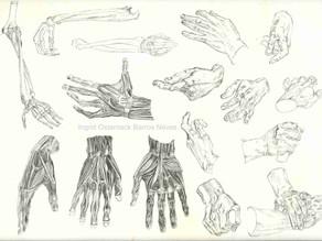 Anatomia & Ilustração Infantil