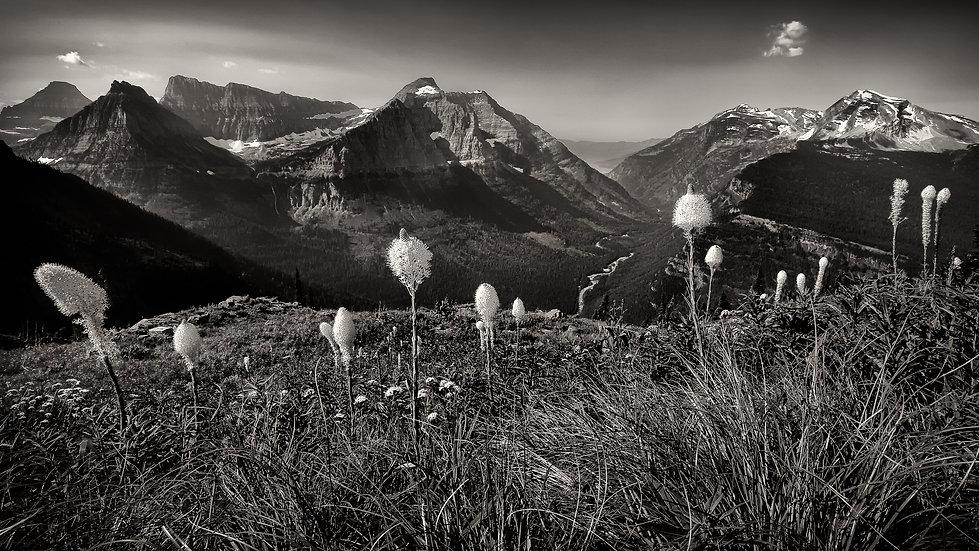 Beargrass in Black & White