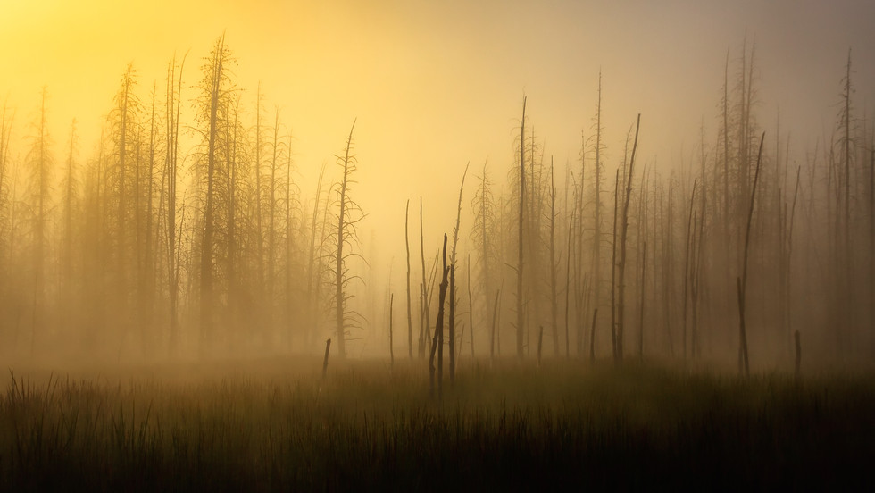 Sunrise in the Ghost Forest