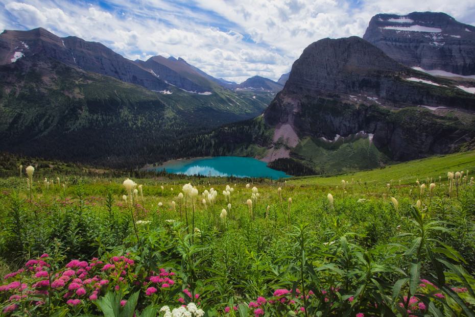 Wildflowers & Lower Grinnell Lake