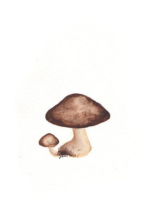 Tan Shrooms