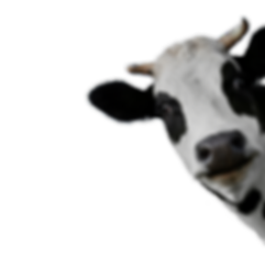 cow_PNG50576.png