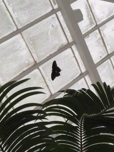 conservatory butterfly