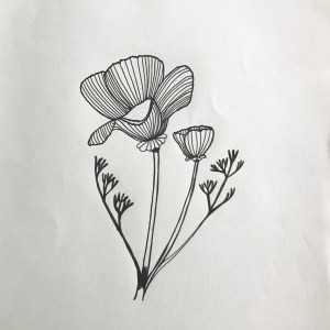 pen drawing of california poppy flower