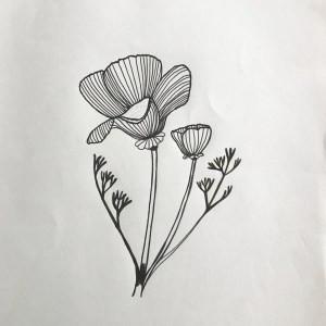 pen drawing of california poppy flower
