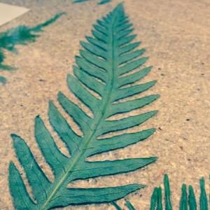 fern long