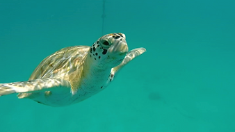turtle tour barbados