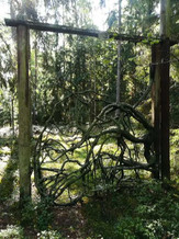 Portti metsässä.jpg
