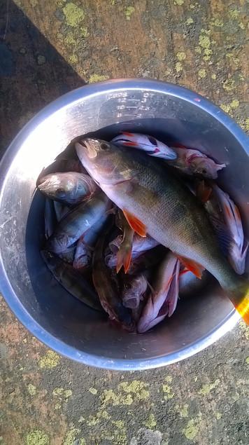 Kalan saalista lounaaksi viljelyn lomassa.jpg