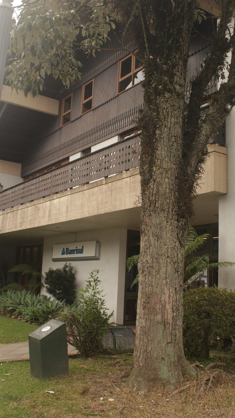 Ipê Amarelo foi salvo quando da construção desta sede do Banco, graças aos esforços do professor e historiador Hugo Daros. O Banco foi sensível aos apelos e preservou a árvore (FOTO) para a posteridade.