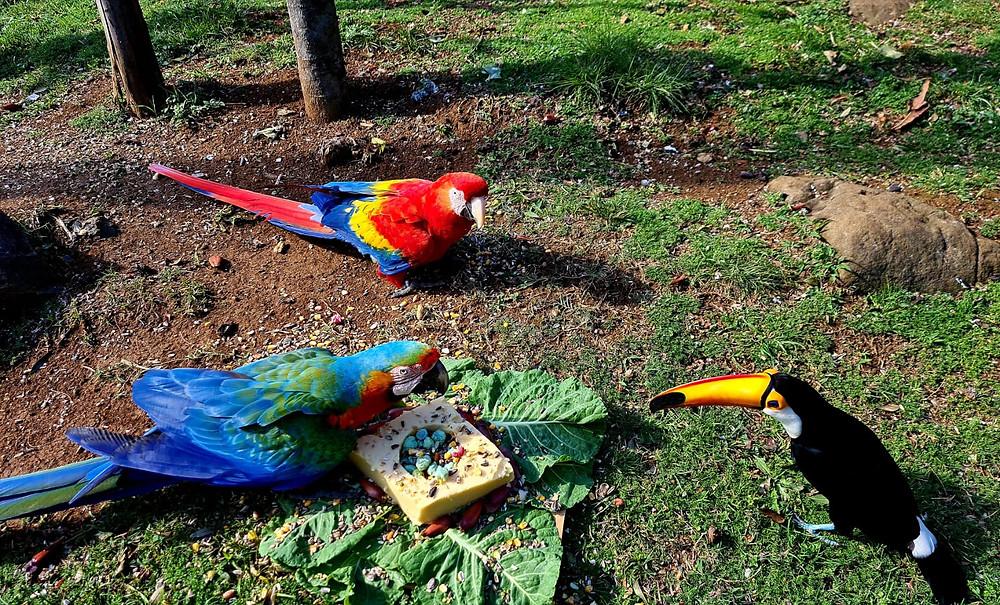 Os macacos e as aves (FOTO) ganharam bolos temáticos de polenta e pinhão.