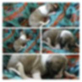girl 4, 1 week collage.jpg