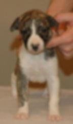 Boy 2 (George) - 4 weeks