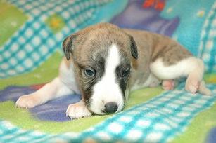 Louis (boy 3), 3 weeks