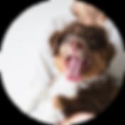 servicios_veterinaria.png