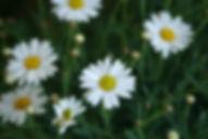 Phytotherapie, Heilpflanzenkunde Baden, Beratung Naturheilkune
