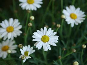 Homeopatia raskauden aikana -kurssi