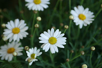 EWVH flowers