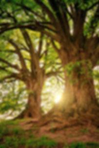 tree-3822149_edited.jpg