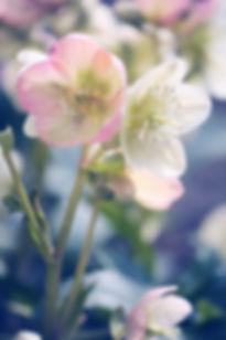flower-3145779_edited.jpg
