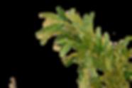 Plante_Spejlvendt.png