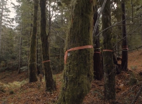 ¿Te atreverías a hacer de un árbol tu memorial funerario?