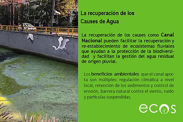 Canal Nacional.jpg