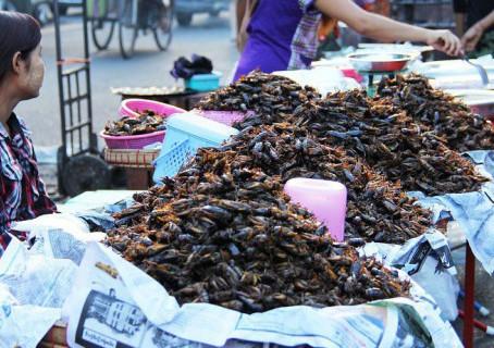 ¡Granjas de Cucarachas!