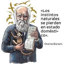 Darwin Tw.jpg