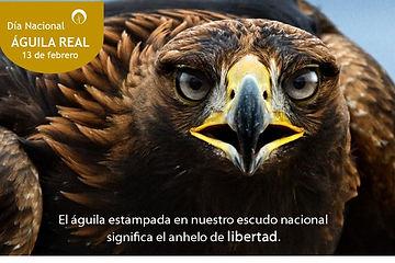 Aguila Real2.jpg